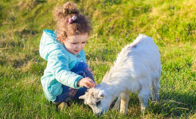 каких животных должен знать ребенок